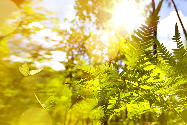 butterfly gardening sunlight