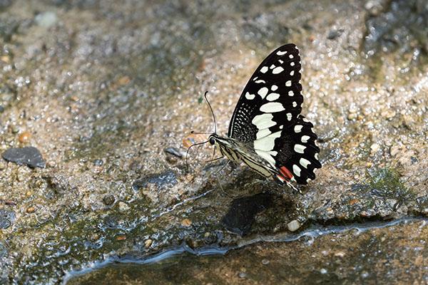 butterfly gardening water